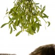 Stock Photo: Couple standing beneath mistletoe