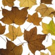 Royalty-Free Stock Photo: Fallen Autumn Leaves
