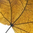 Stock Photo: Detail Of Dry Leaf