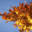 Orange Leaves On A Tree In Autumn — Foto de Stock