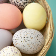 Colorful Eggs In A Basket - Stock Photo