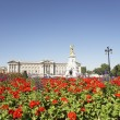 Buckingham Palace With Flowers Blooming In The Queen's Garden, L - Stock Photo
