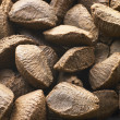 Brazil Nut Shells — Stock Photo