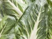 Pak Choi, Bok Choy, Chinese Cabbage — Stock Photo