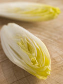 Chicory — Stock Photo