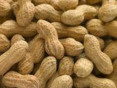 シェルでピーナッツ — ストック写真
