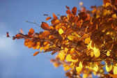 Orange Leaves On A Tree In Autumn — Stock Photo