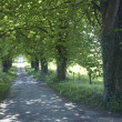 Long Country Road Edged With Green Trees — Stock Photo #4794451