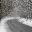Country Road Lined With Snow And Skeletal Trees - Foto Stock