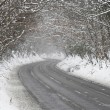 Stock Photo: Country Road Lined With Snow And Skeletal Trees