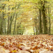 Low Angle View Of Autumn Woods — Stock Photo