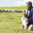 Farm Worker With Flock Of Sheep - Foto Stock