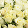 Bunch Of Cream Roses — Stock Photo