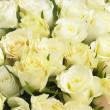 Bunch Of Cream Roses — Stock Photo #4796252