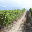 Road through vineyard - Stock Photo
