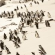 Flock of Adelie penguins, walking along the shoreline — Stock Photo