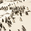 Flock of Adelie penguins, walking along the shoreline - Stock Photo
