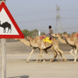 Beware Of Camel Sign In Dubai - Photo