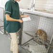 Vetinary Nurse Checking Sick Animals In Pens — Stock Photo