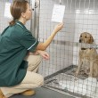 Vetinary Nurse Checking Sick Animals In Pens — Stock Photo #4797311