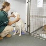 Vetinary Nurse Checking Sick Animals In Pens — Stock Photo