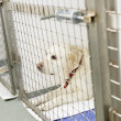 Dog Recovering In Vet's Kennels — Stock Photo
