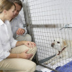 Couple Visiting Pet Dog — Stock Photo #4797334