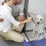 Couple Visiting Pet Dog — Stock Photo #4797335