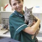 Vet Holding Cat In Surgery — Stock Photo #4797339