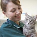 Vet Holding Cat In Surgery — Stock Photo #4797340