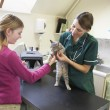 Young Girl Bringing Cat For Examination By Vet - Stock Photo