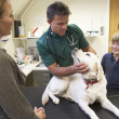 Boy And Mother Taking Dog For Examination By Vet - Stockfoto