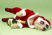 Small Dog In Santa Costume Lying Down With Champagne and Shades — Fotografia Stock