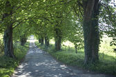 Long Country Road Edged With Green Trees — Stock Photo