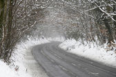 Country Road Lined With Snow And Skeletal Trees — 图库照片