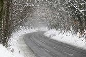 Estrada ladeada de neve e árvores esqueléticas — Foto Stock