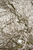 Snow And Ice Gathering On Tree Branches — Stock Photo