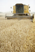 Combine Harvester Working In Field — Photo