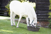Pony Feeding From Trough — Stock Photo
