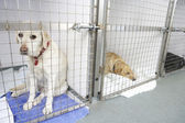 Dog Recovering In Vet's Kennels — Stockfoto
