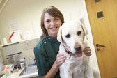 Vet With Dog In Surgery — Zdjęcie stockowe