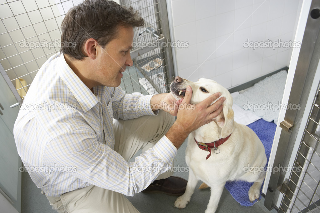 Vet Checking Dog In Pen — Stock Photo #4797315