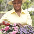 Senior Woman Gardening — Stock Photo #4816004