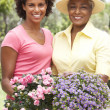 Senior Woman With Adult Daughter Gardening Together — Stock Photo