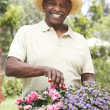Stock Photo: Senior MGardening