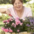 Stock Photo: Senior Woman Gardening