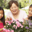 Granddaughter With Grandmother And Mother Gardening Together — Stock Photo #4816237
