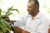 Senior Man Looking After Houseplant — Stock Photo