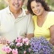 Royalty-Free Stock Photo: Senior Couple Gardening Together