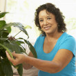 Senior Woman At Home Looking After Houseplant - Stock Photo